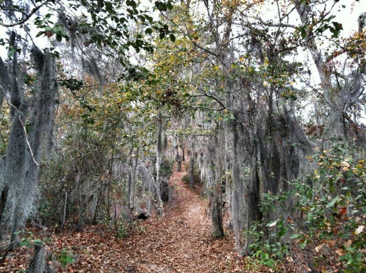 Thursday's trail run
