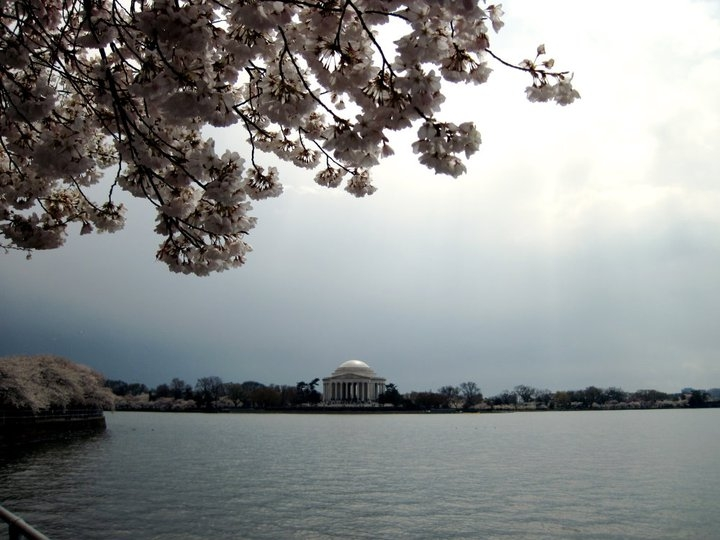 Looking forward to our weekend filled with Cherry Blossoms!