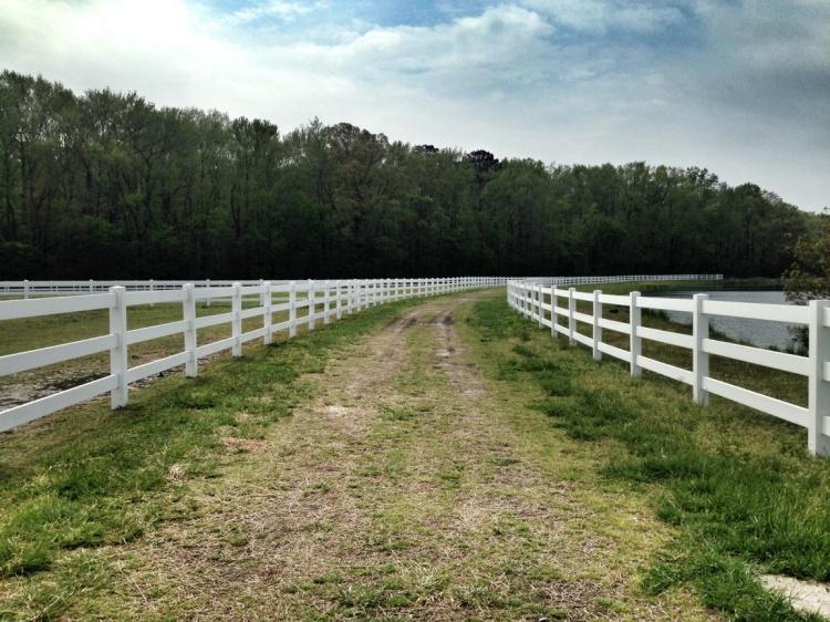 Run beside horse pastures